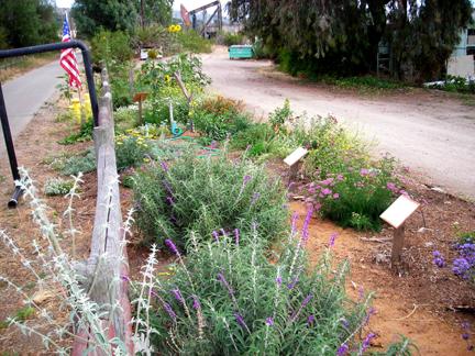 The B3 Garden on Memorial Day 2008.