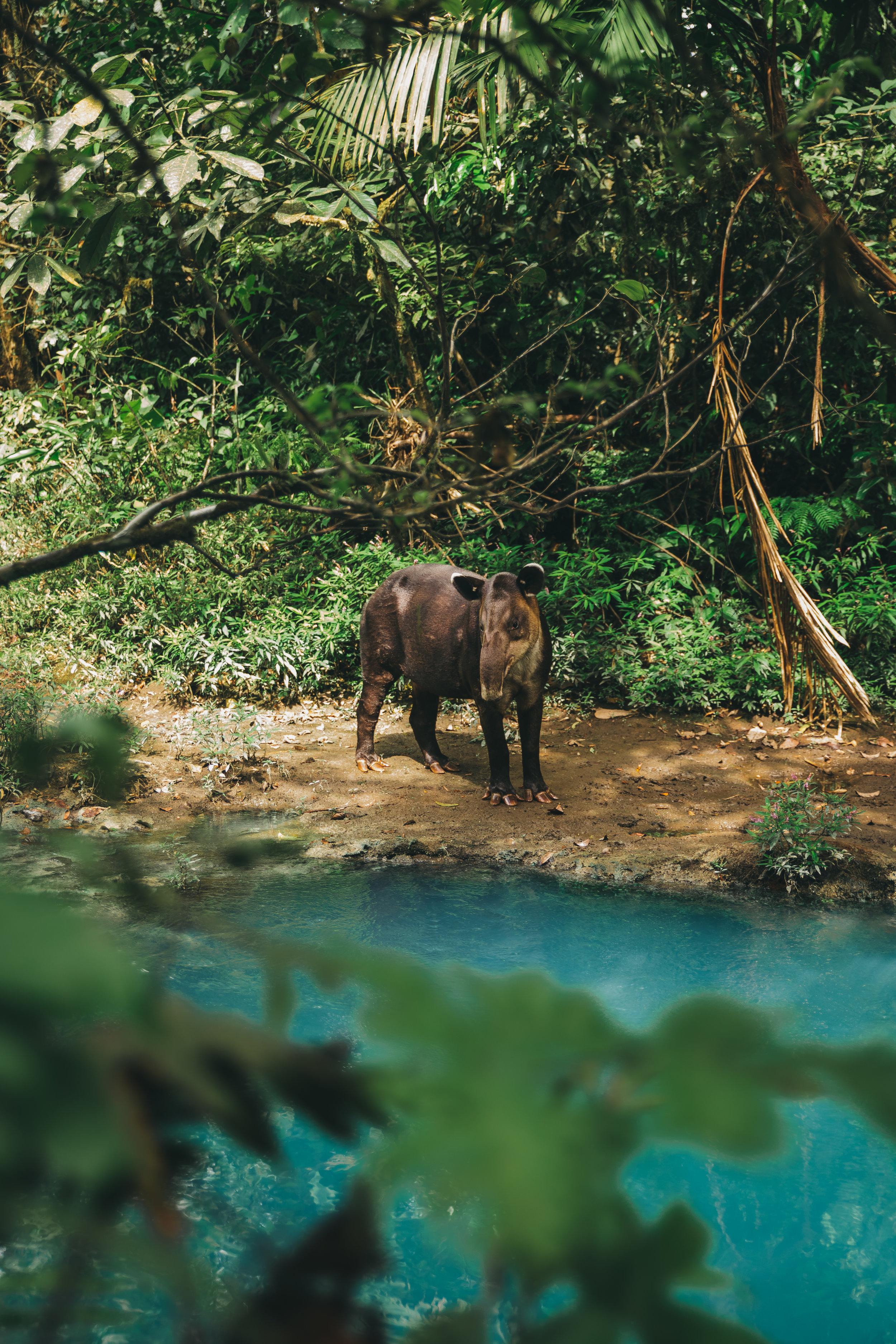 Rio celeste 3.jpg