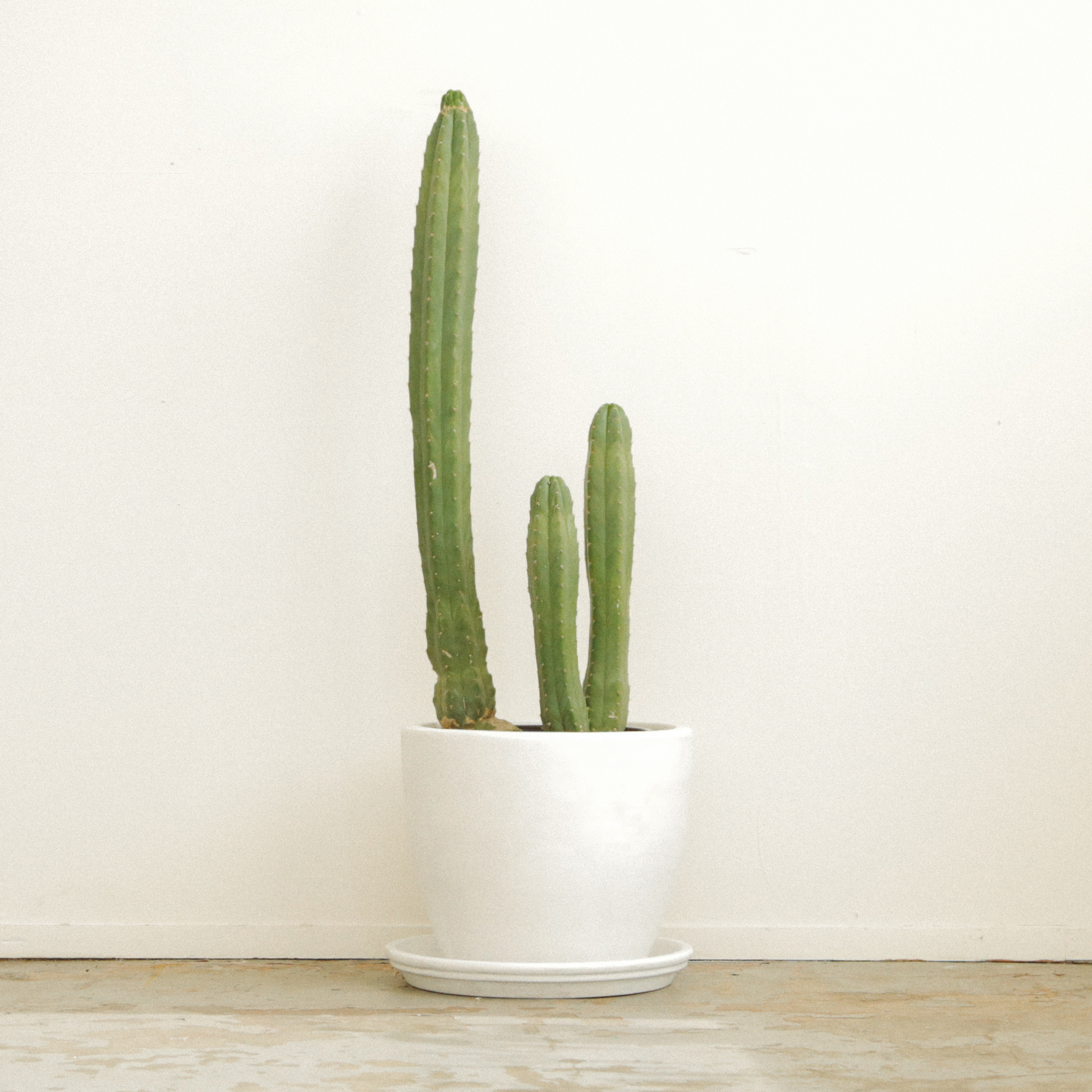 Ac - Other Cactus -