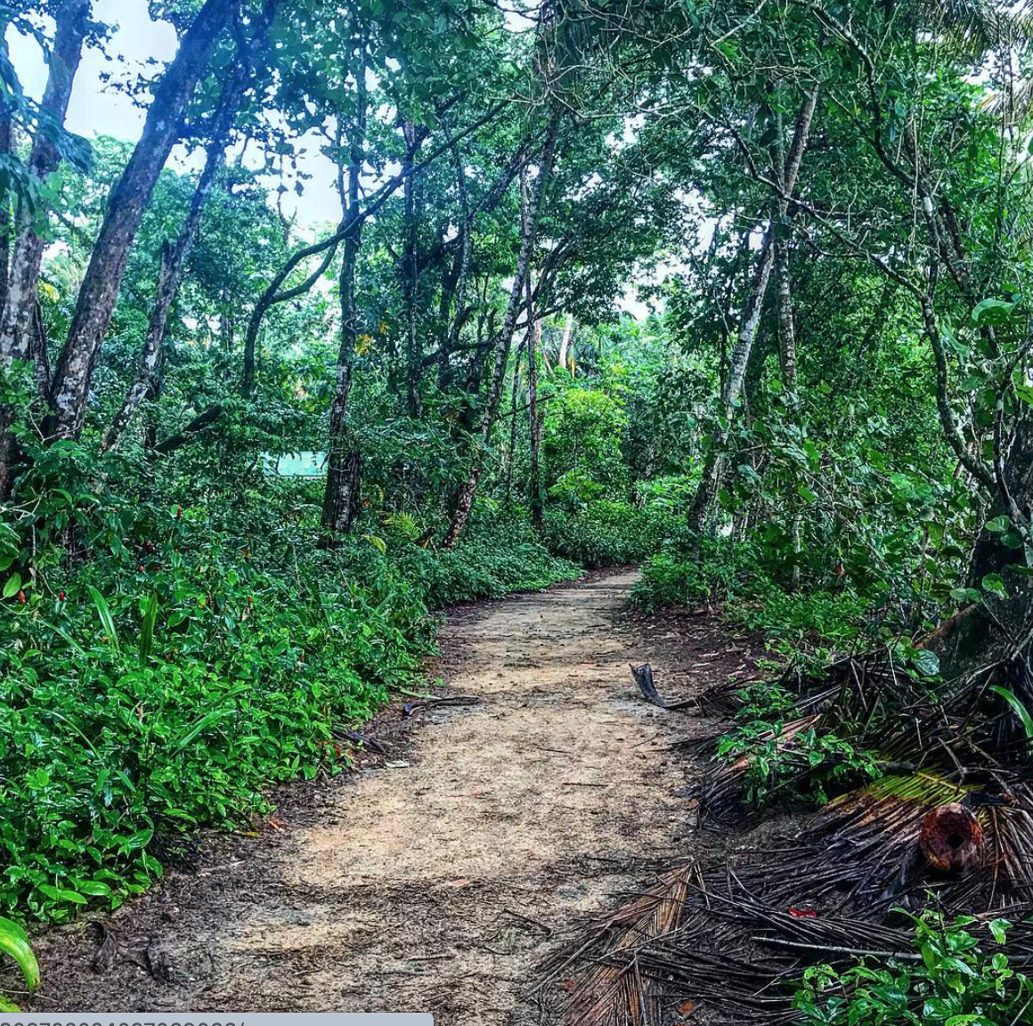 Forest Hiking Trail in Limon
