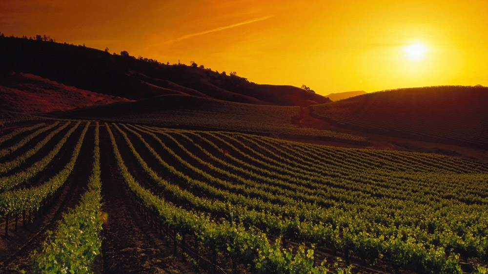 5-Napa-Valley-California-USA-Exclusive-Property-Solstice-Luxury-Destination-Club.jpg