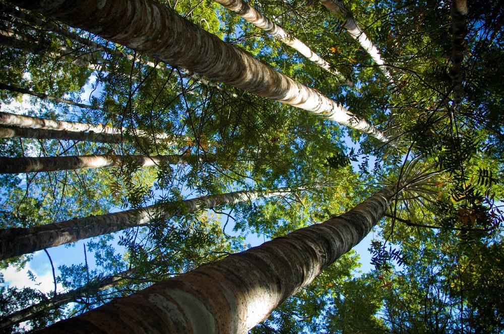 1-Land-Activities-and-Surroundings-Tahi-Nature-Reserve-Pataua-North-New-Zealand-Additional-member-property-Solstice-Club.jpg