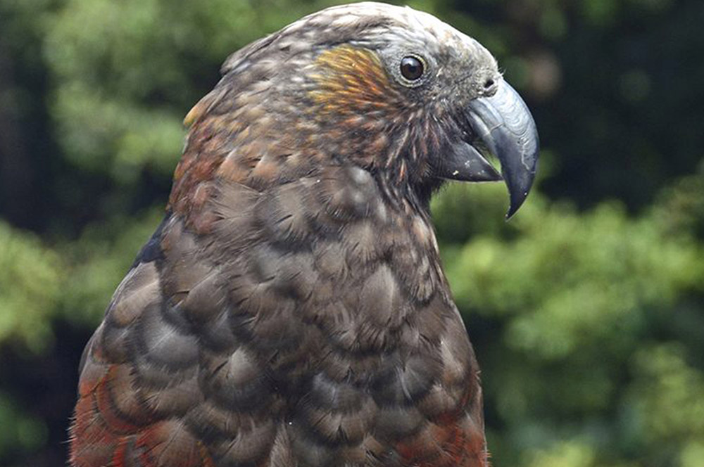3-Air-Activities-and-Surroundings-Tahi-Nature-Reserve-Pataua-North-New-Zealand-Additional-member-property-Solstice-Club.jpg