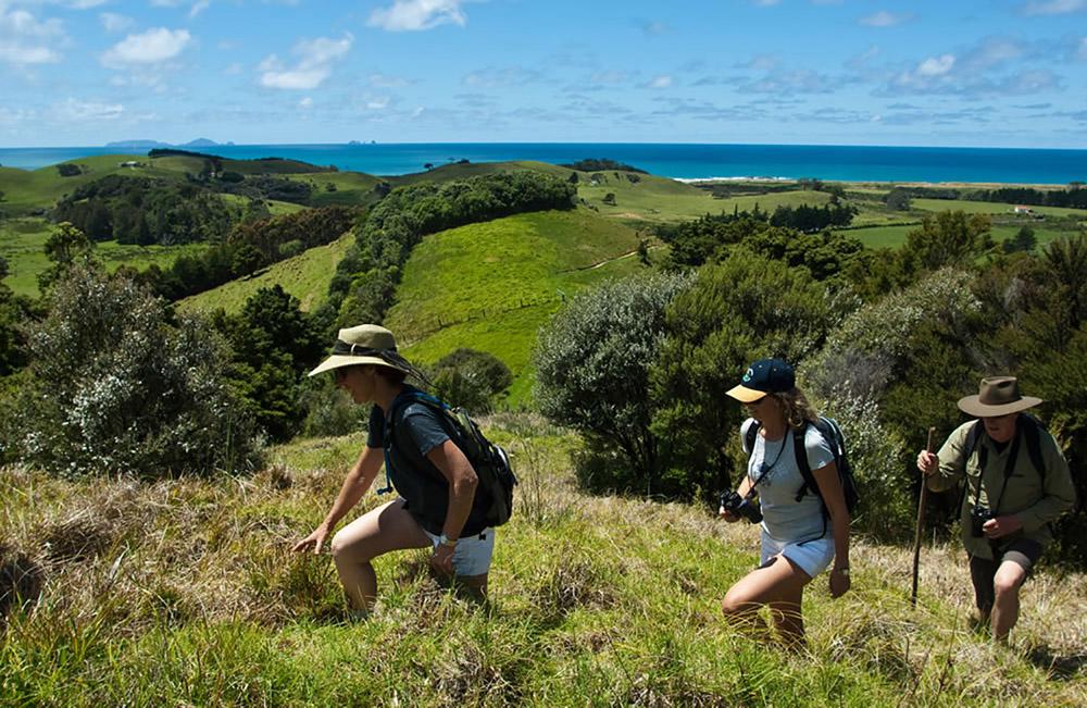 7-Global-Ecosphere-Retreat-and-Long-Run-Destination-Tahi-Nature-Reserve-Pataua-North-New-Zealand-Solstice-Luxury-Destination-Club-Additional-member-property.jpg