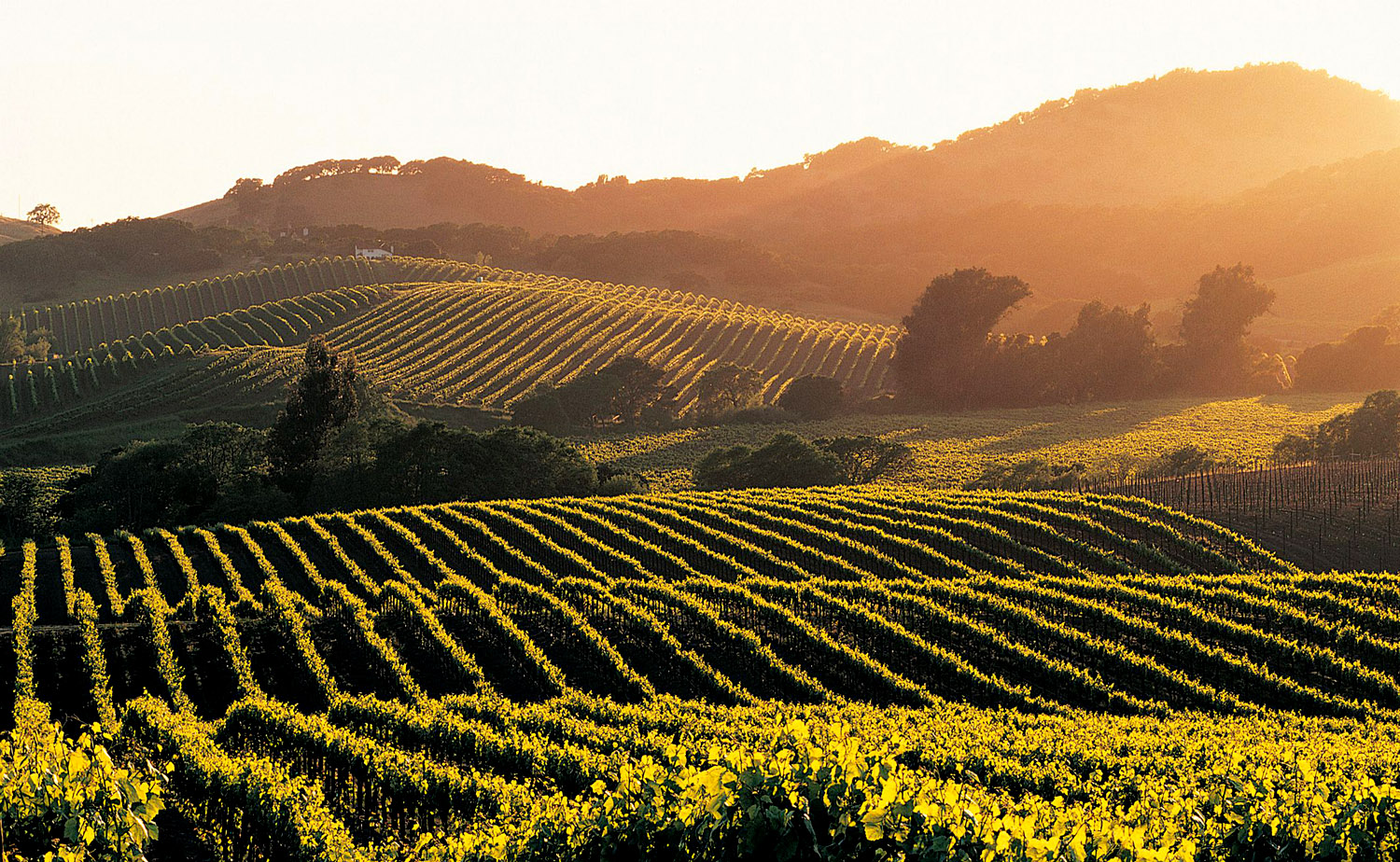 Napa Valley Exclusive Destination Solstice Club