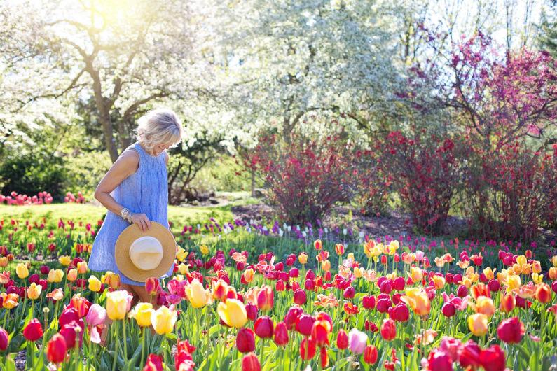 Jinga-Life-beautiful-blooming-blossom-413735-bv.jpg