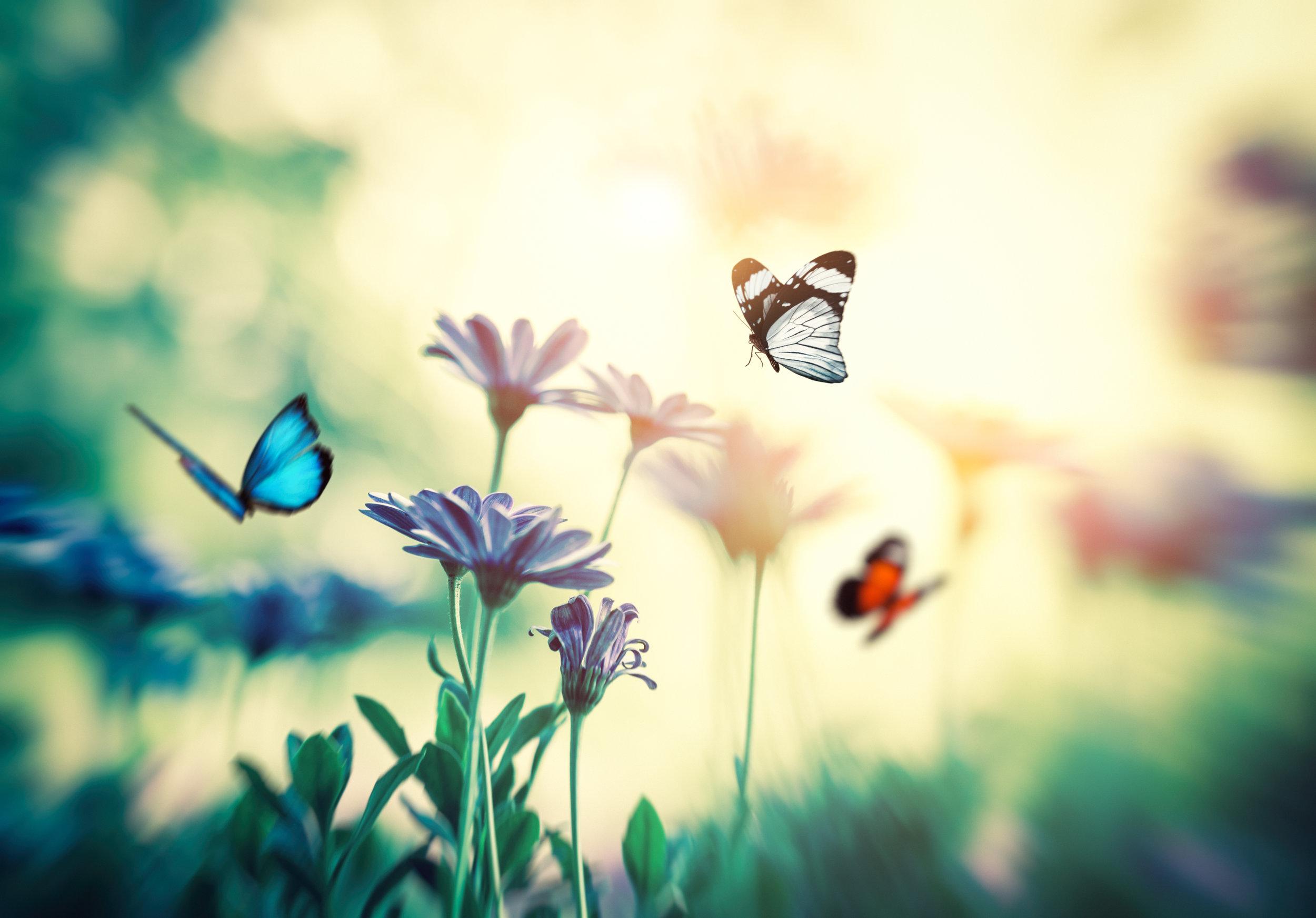 Praktijk Nieuw Begin Vlinder