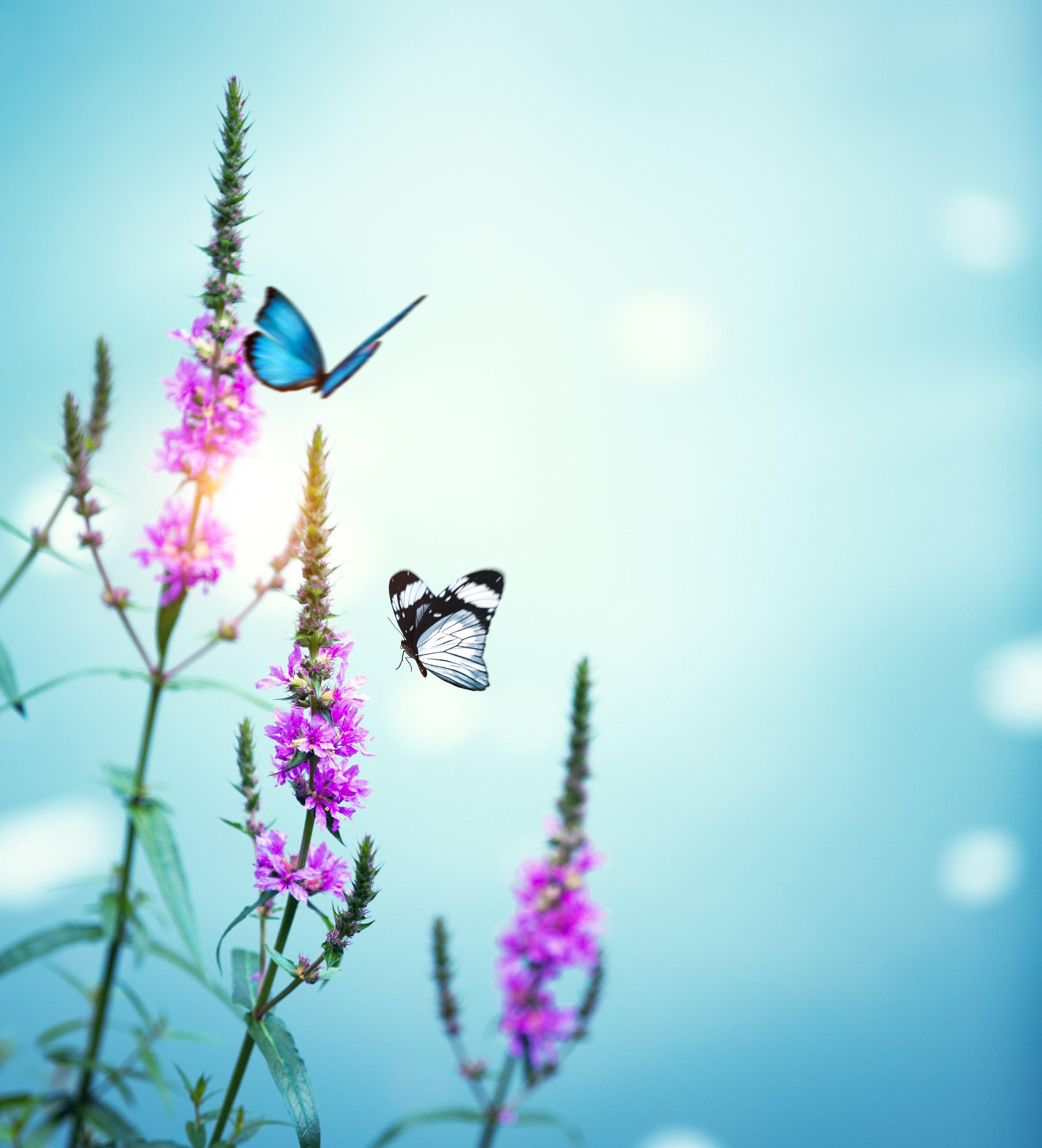 Praktijk Nieuw Begin Vlinders