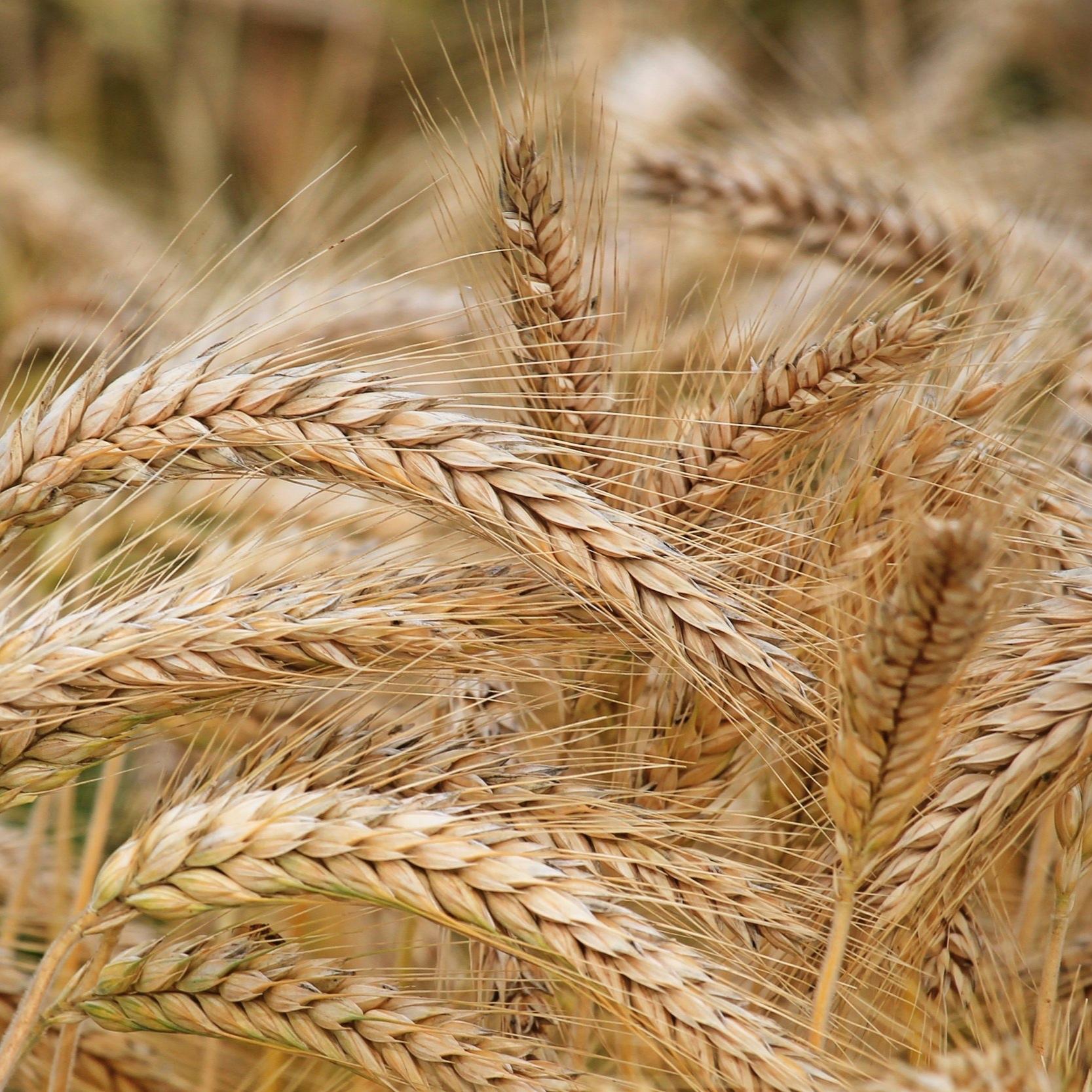 cereal-close-up-crop-326082.jpg