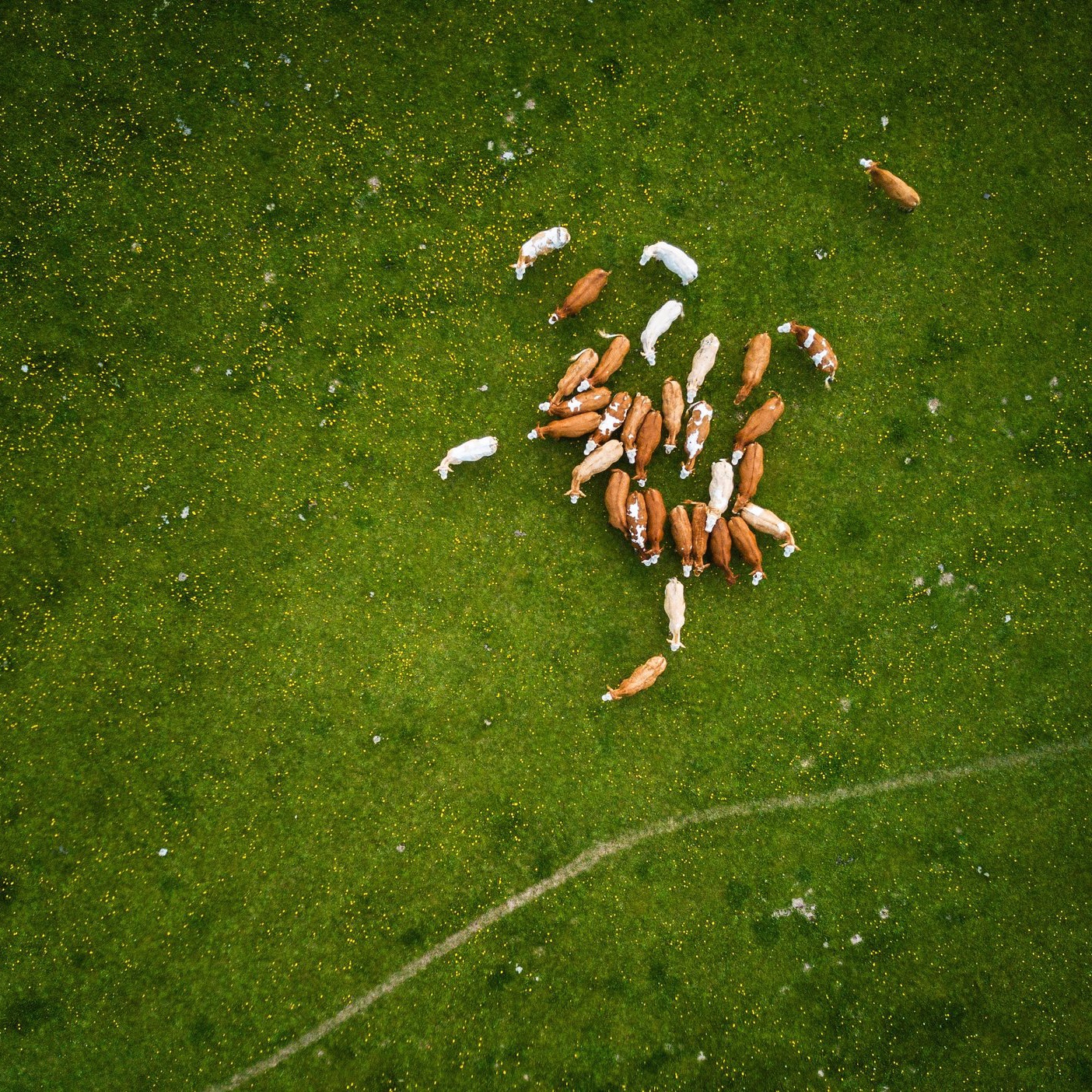 aerial-aerial-shot-aerial-view-753868.jpg