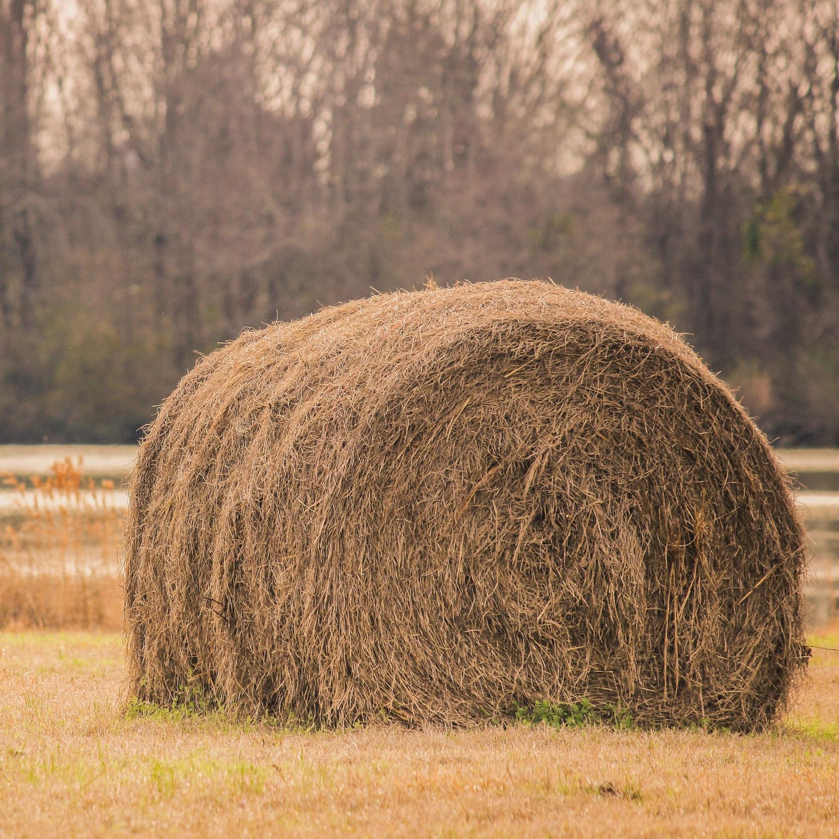 farm-farming-field-170394.jpg