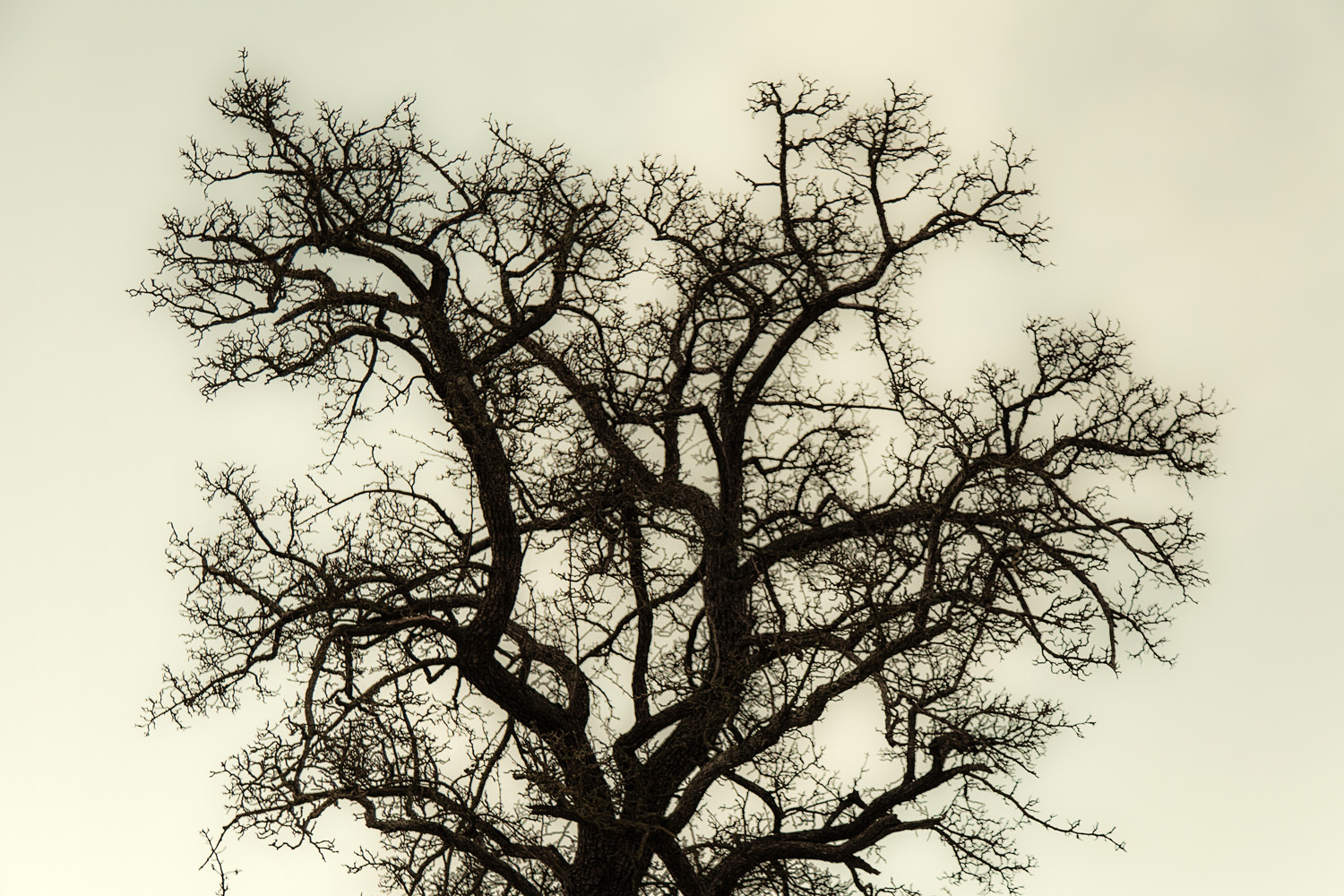 OldTree_NoLeaves©PhotoBenteJaeger.jpg