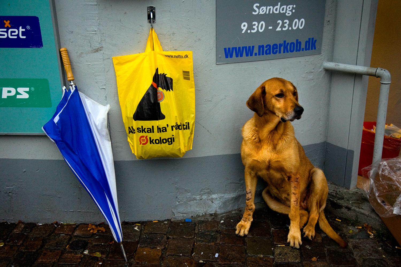 hjemløs-hund_økologi©FotoBenteJæger.jpg