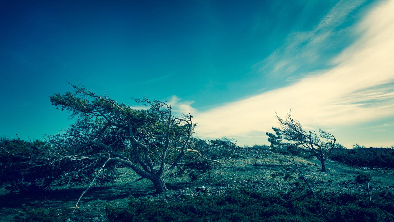 rullesten_Norge©FotoBenteJæger-2.jpg