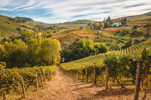 Il marketing per il settore vitivinicolo si fa anche in vigna