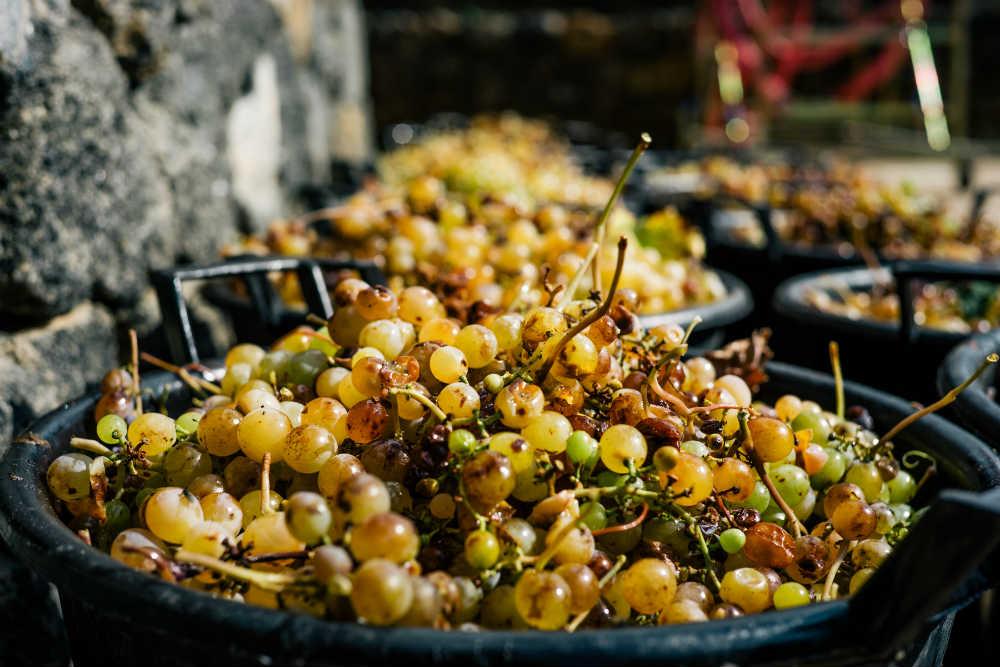 la generazione dei contatti per un'azienda vitivinicola a pantelleria