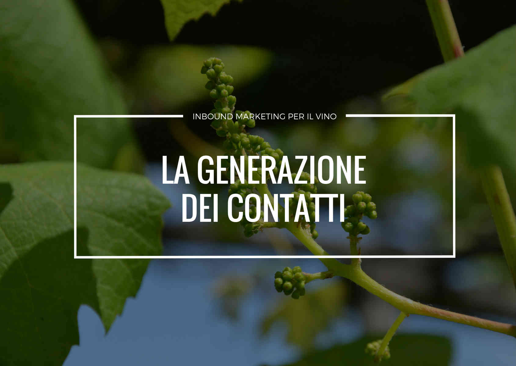 la lead generation per un'azienda vitivinicola è il primo passo per l'inbound marketing