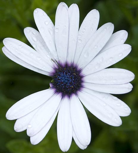 imperfect-flower.jpg