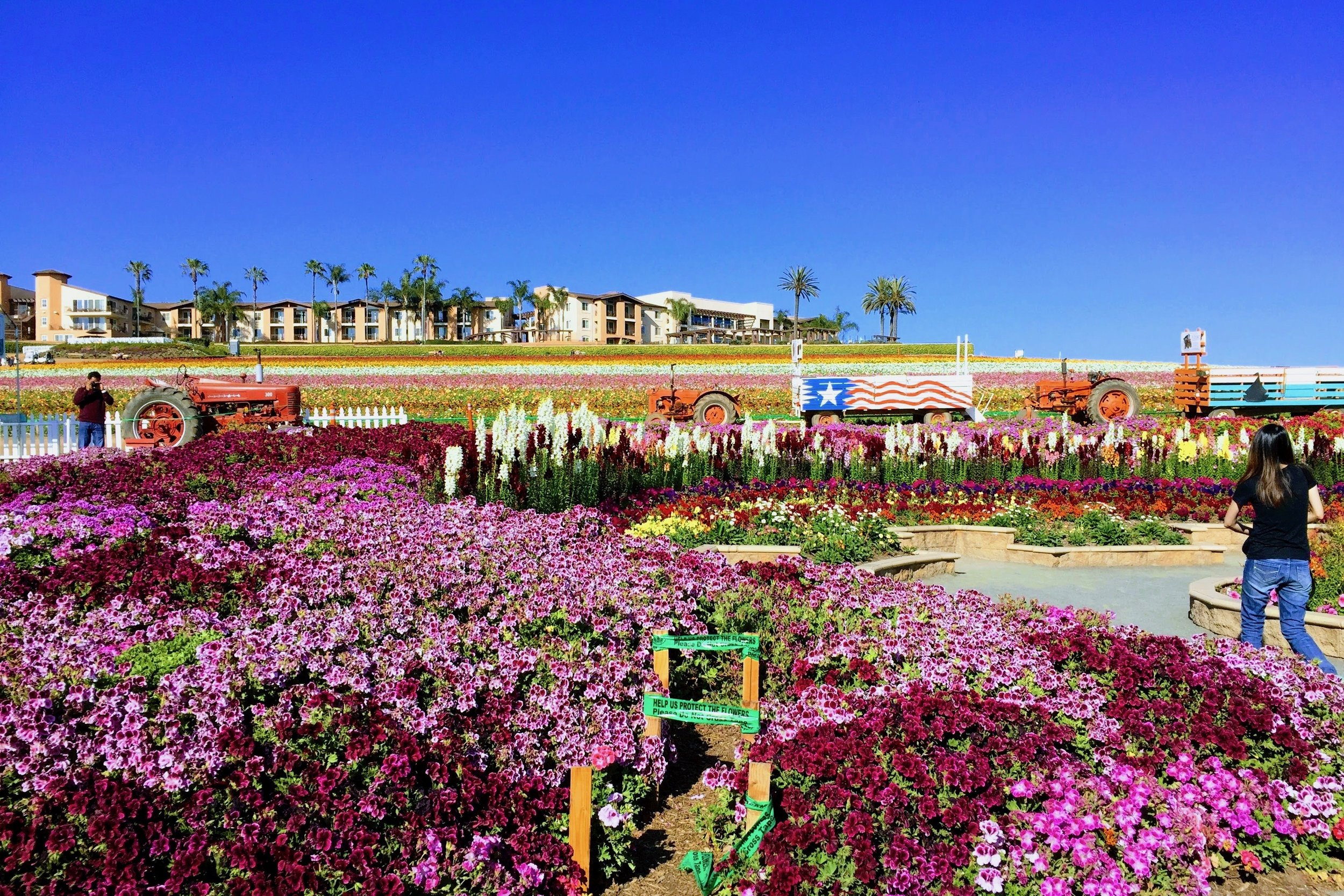 Carlsbad Arts and Culture Master Plan  Read More →