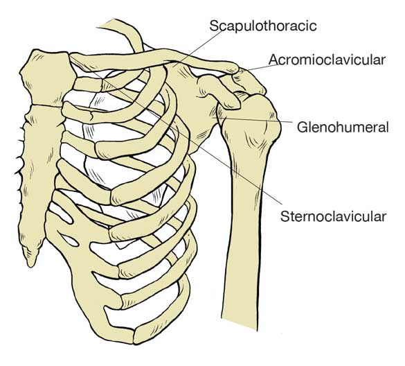 anterior view of the four joints that make up the shoulder complex