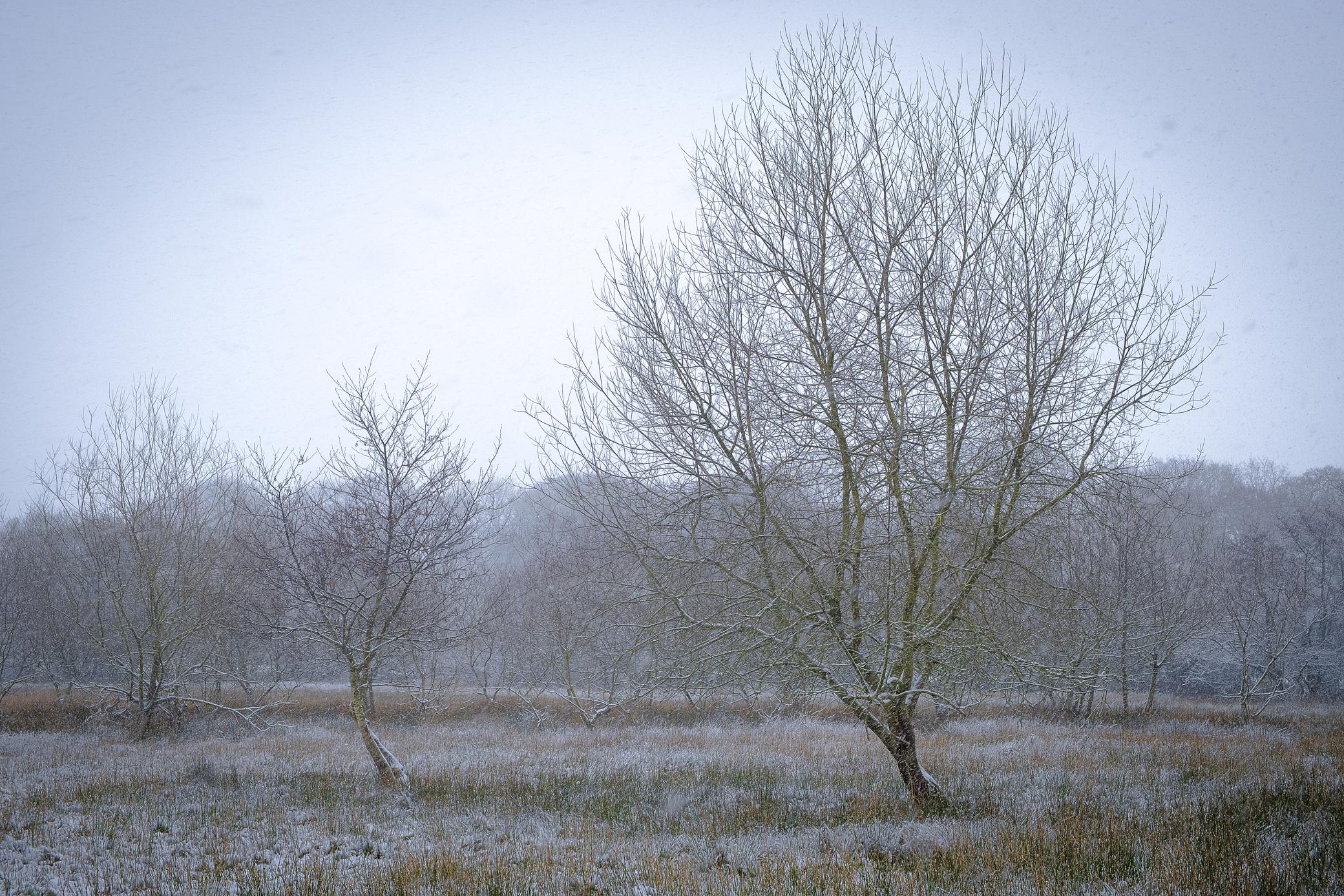 winter-3.jpg