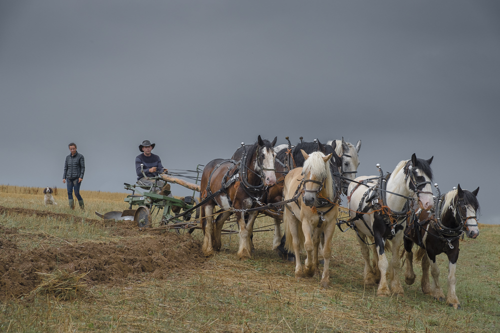 heavyhorses-2.jpg