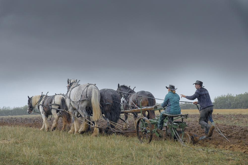 heavyhorses-3.jpg