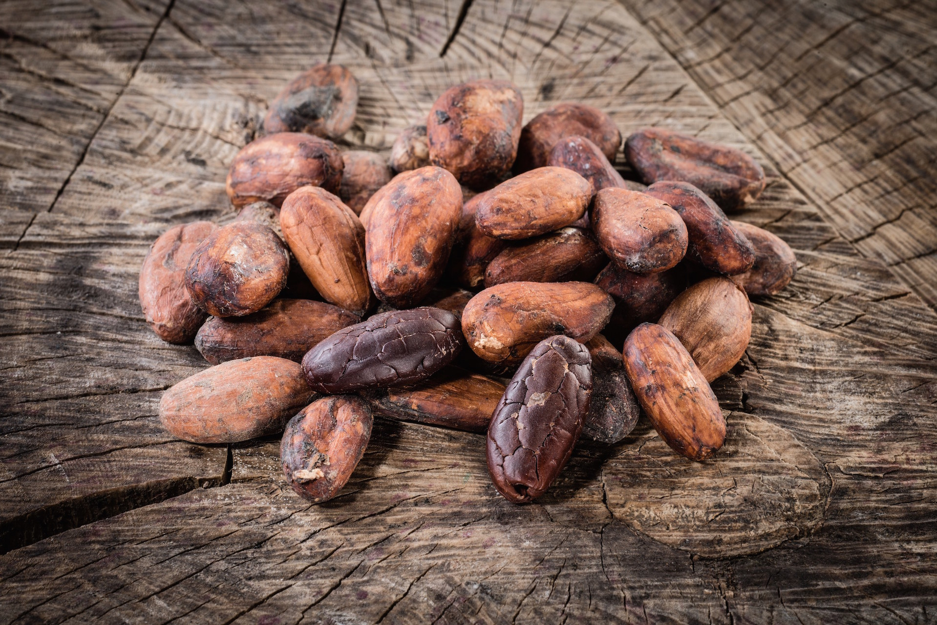 Cocoa Beans are available in multiple processed forms for standard use or for more controlled uniformity of the fermentation process.