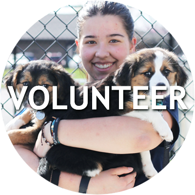 Learn more about volunteering with the Naperville Area Humane Society