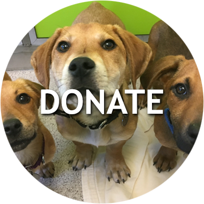 Give to the Naperville Area Humane Society