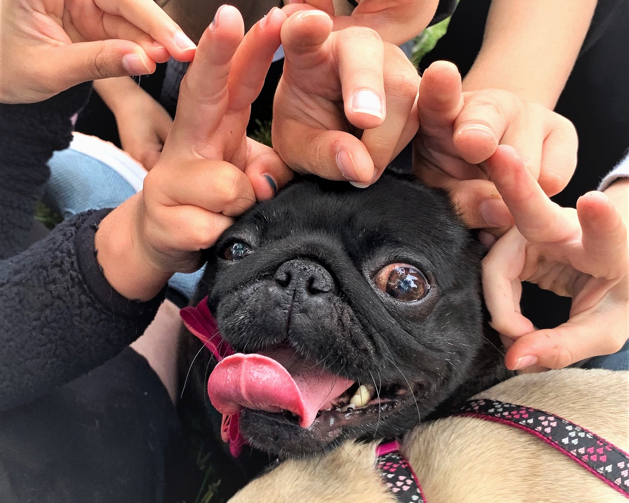 Summer Camp — Naperville Area Humane Society