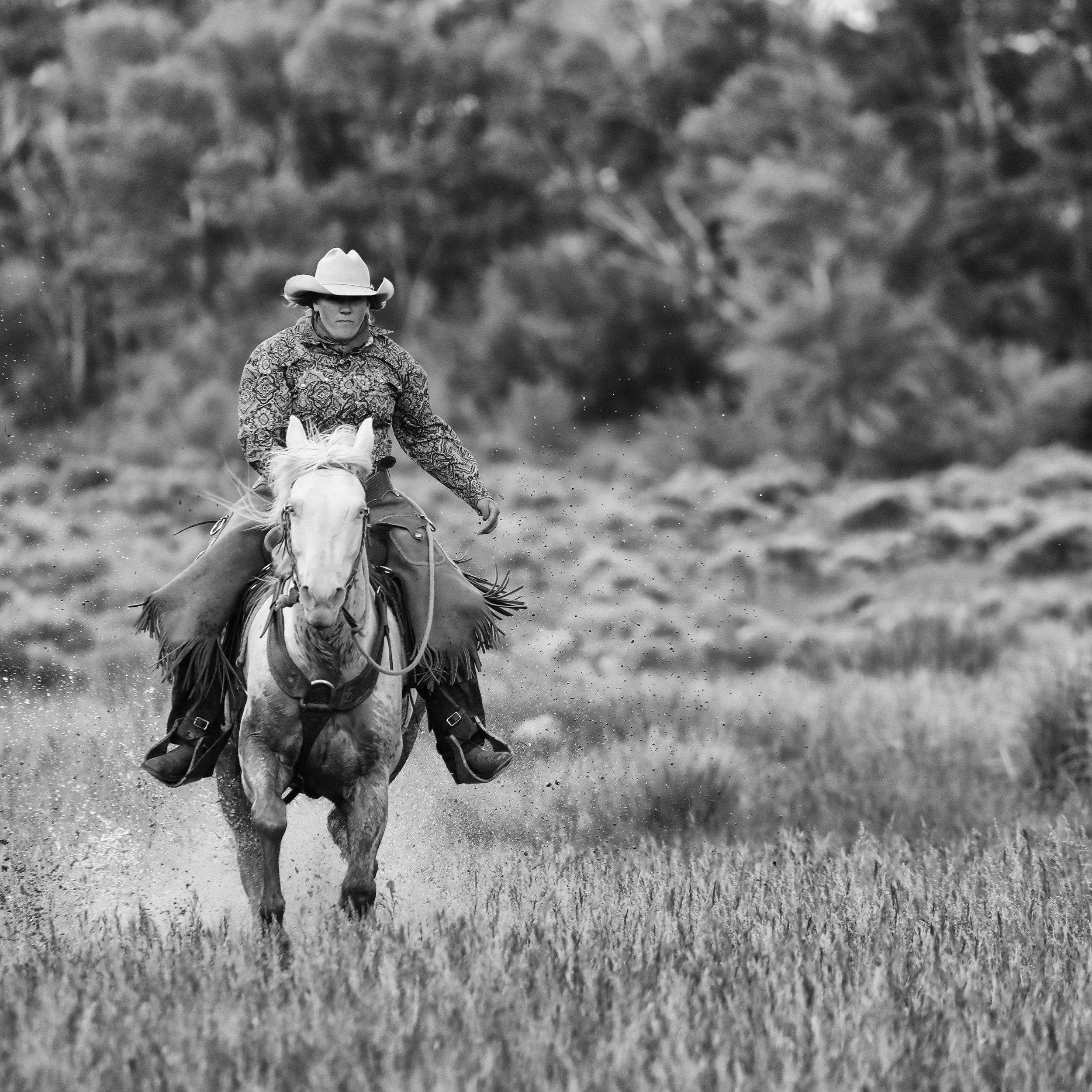 Miss Cowboy Kris II