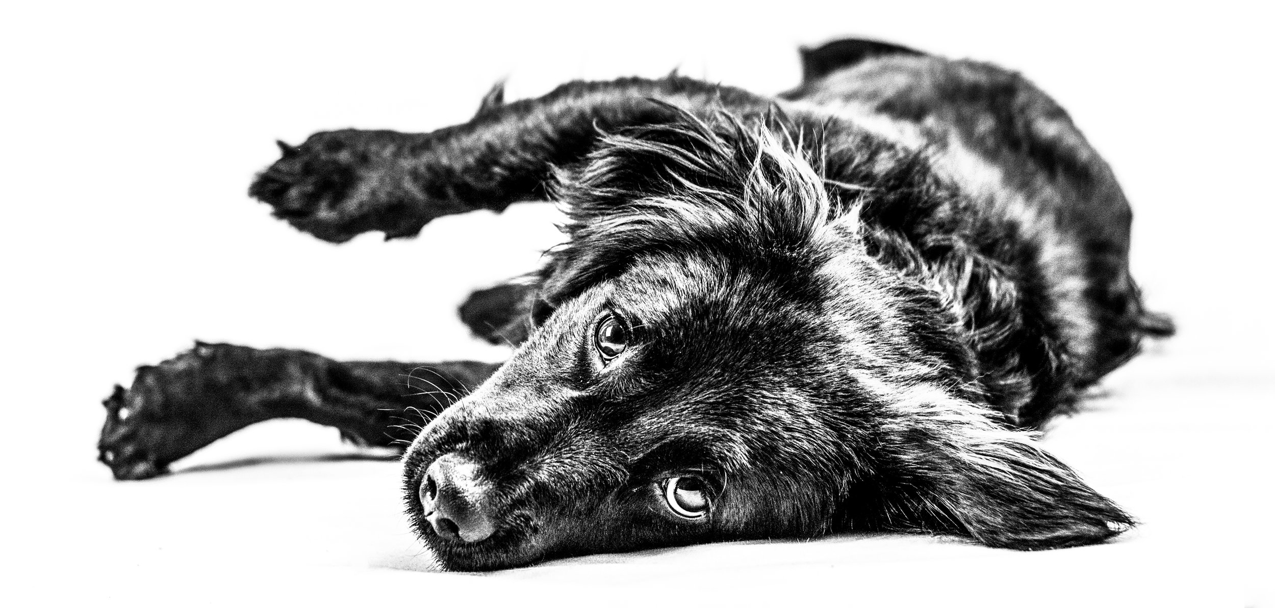 Black and White Image of Rescue Dog by Professional Photographer - Brent D'Silva