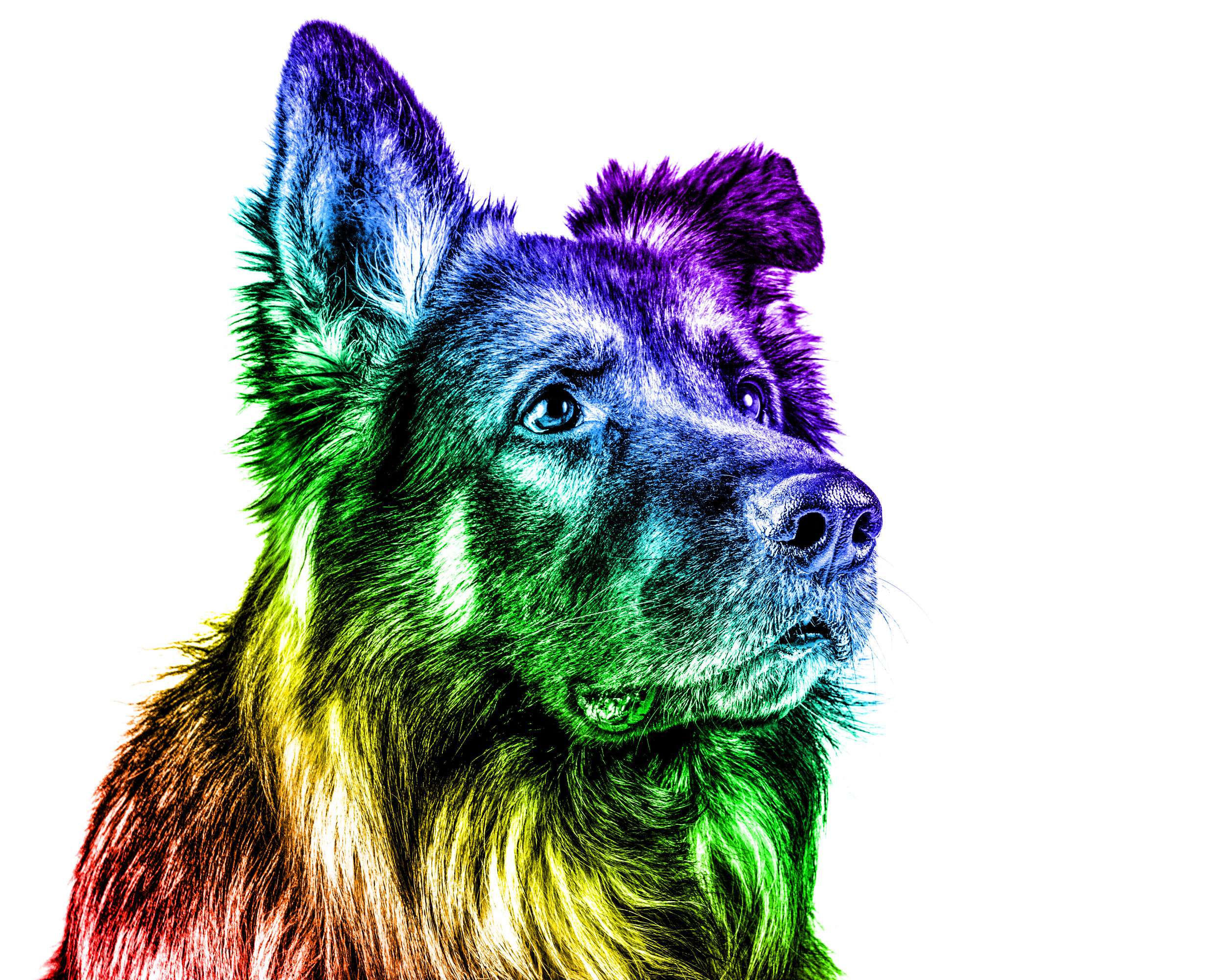 Pride Pets - Brentdsilva (7).jpg