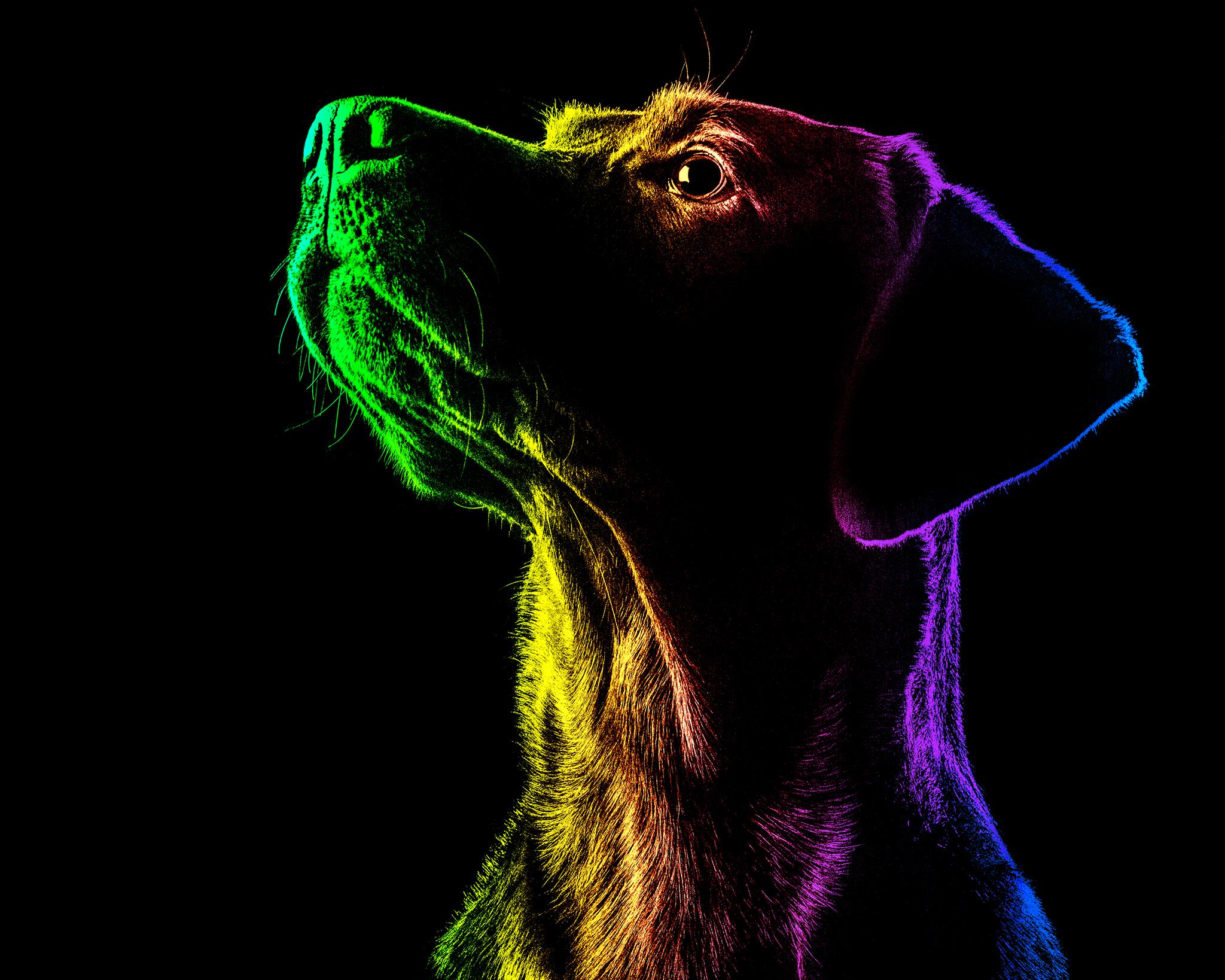 Pride Pets - Brentdsilva (10).jpg