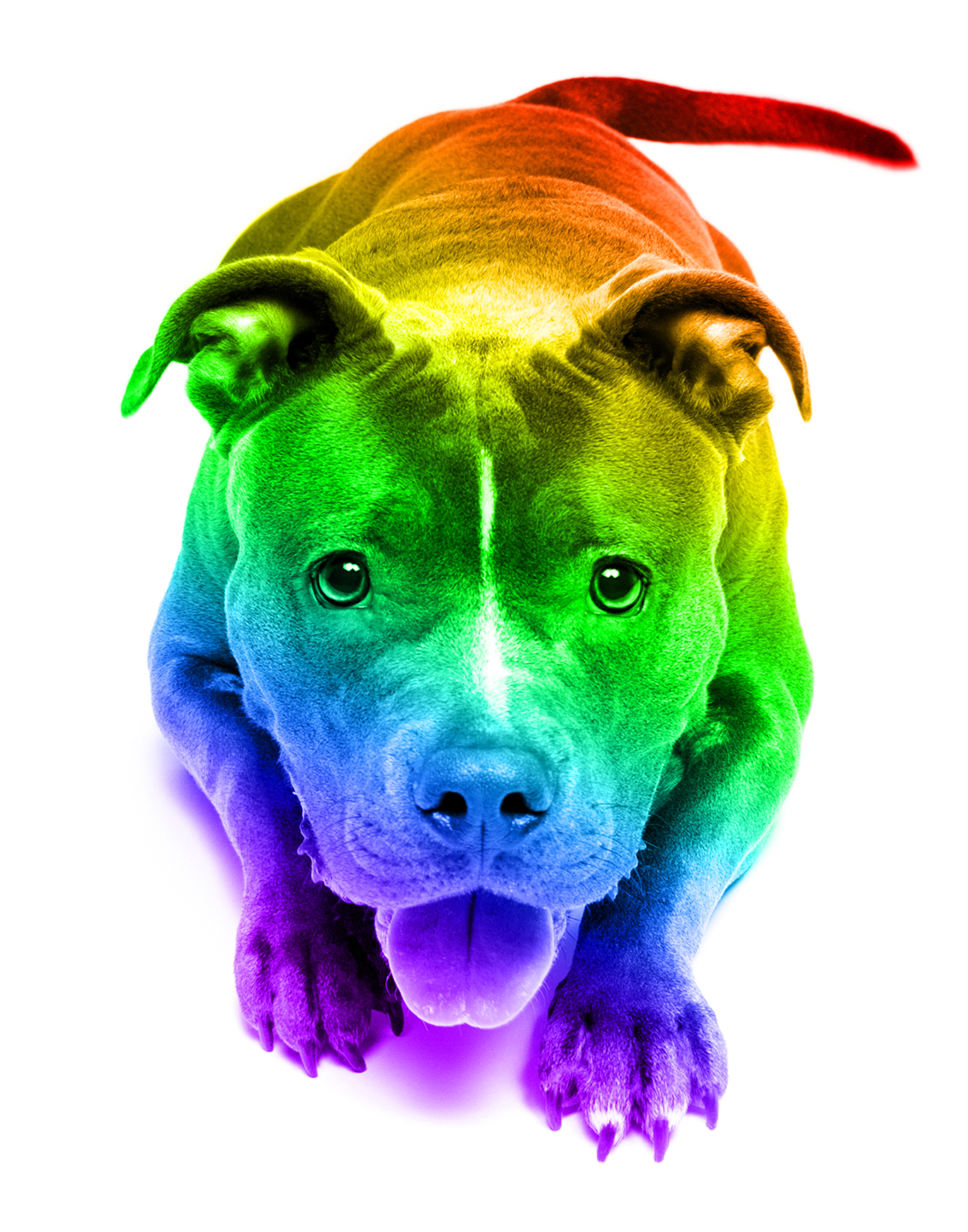 Pride Pets - Brentdsilva (16).jpg