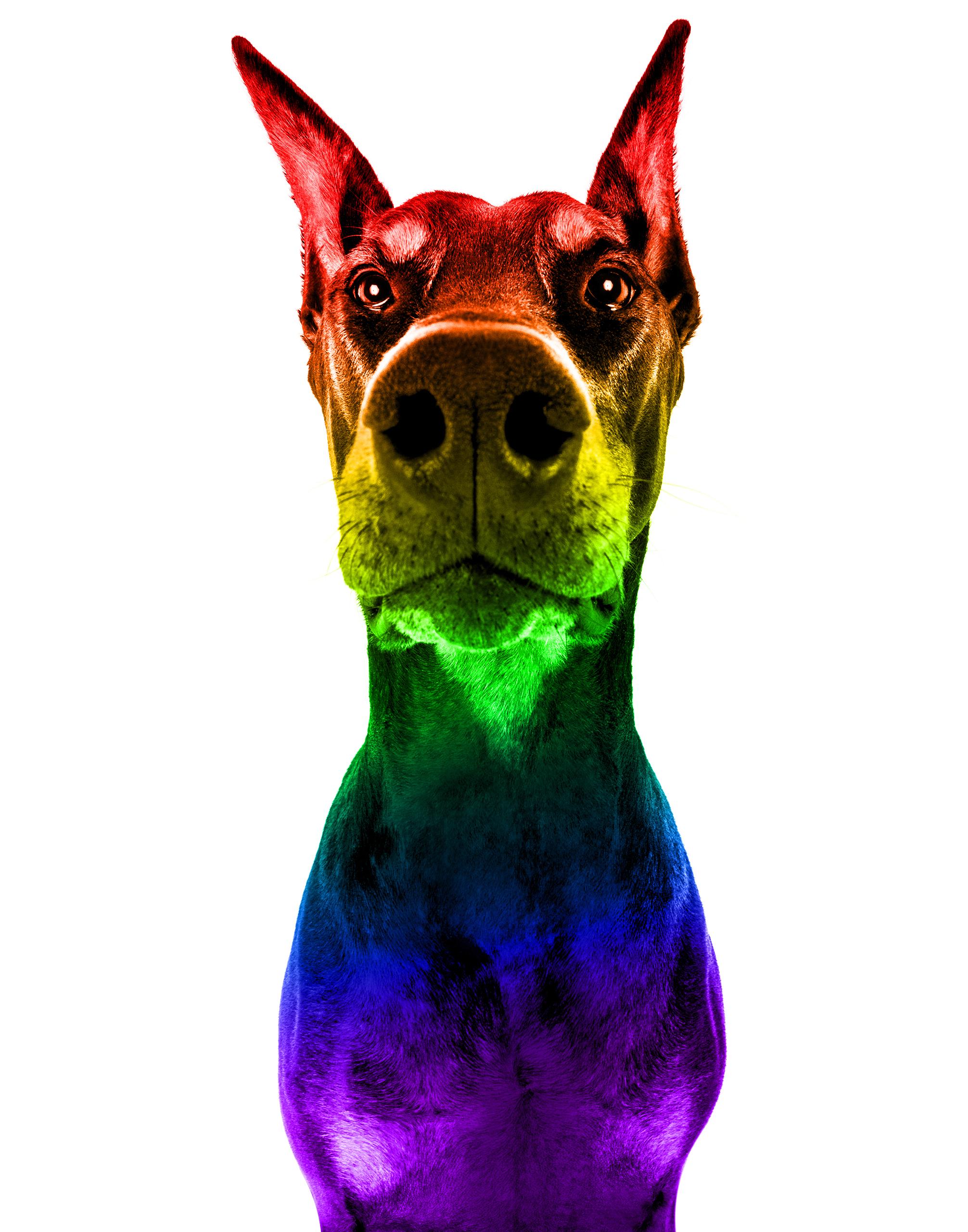 Pride Pets - Brentdsilva (20) V.jpg