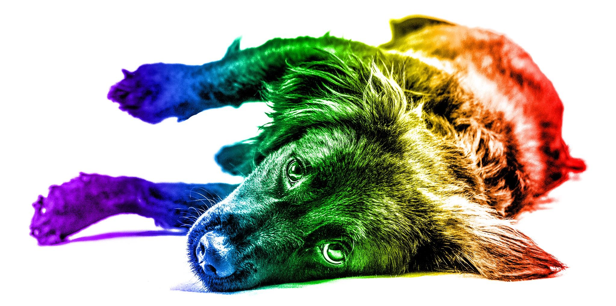 Pride+Pets+-+Brentdsilva+%284%29.jpg