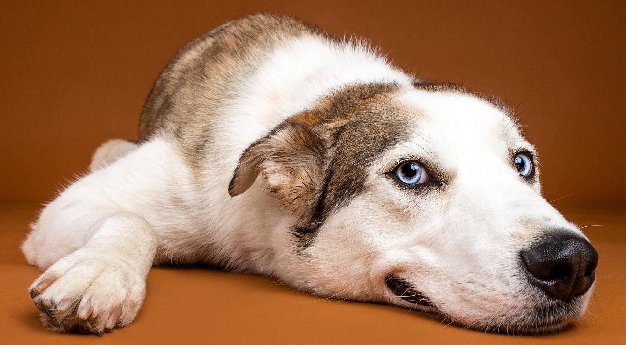 Max+-+Mixed+Breed+-+Dog+Photography.jpg