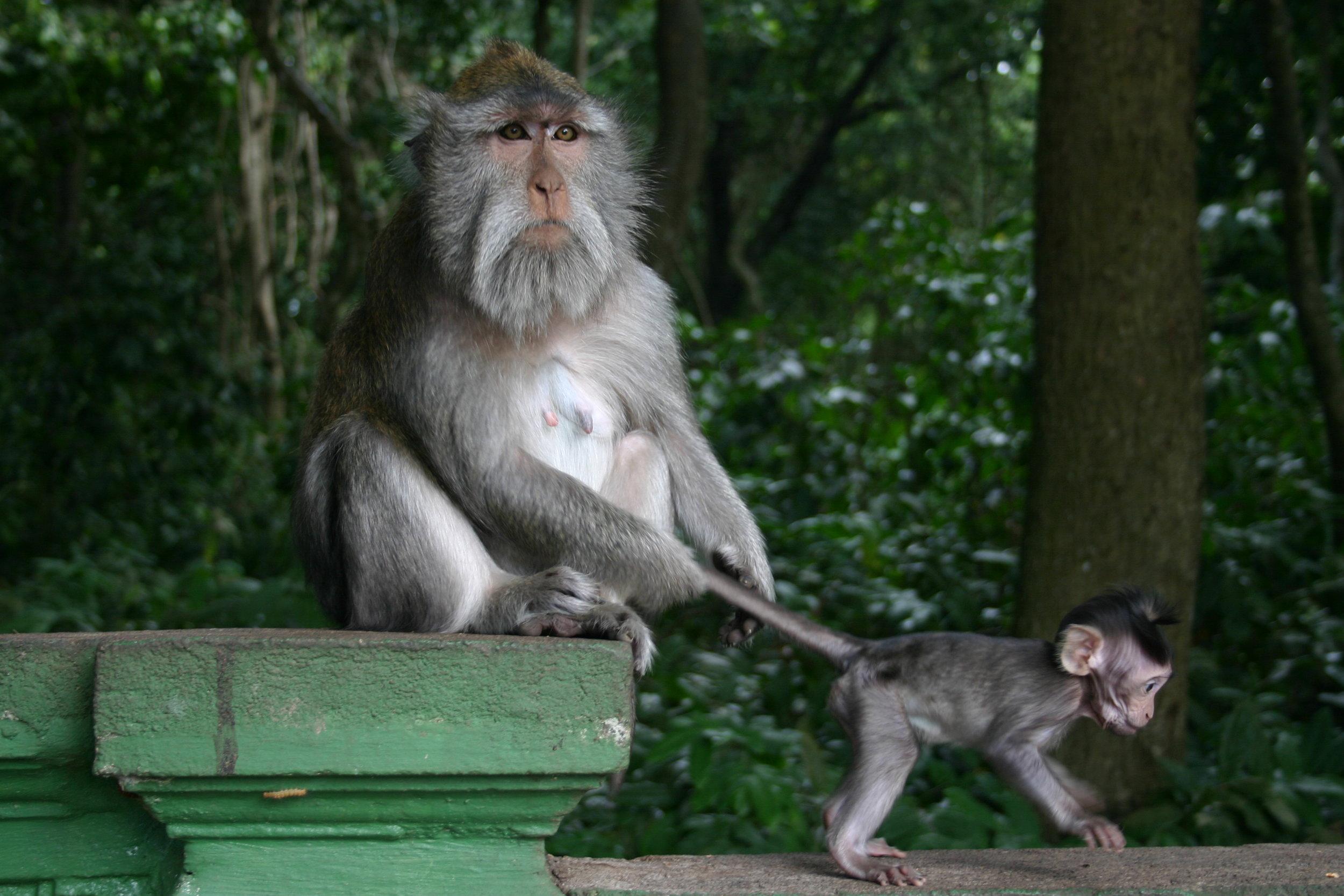 Sacred-Monkey-Forest-Ubud.jpg