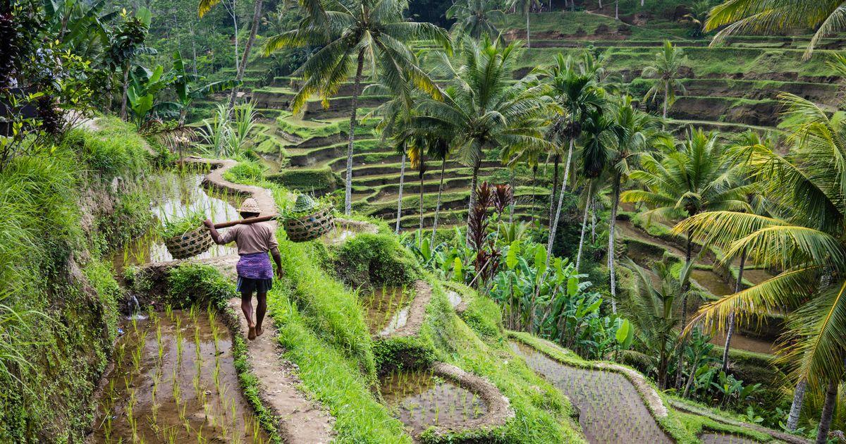Tegallalang-rice-terraces-Bali.jpg