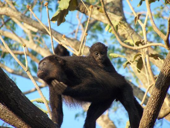 monkeys-at-the-hotel.jpg