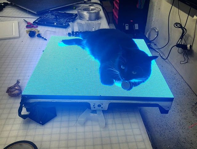 Gorilla likes LED a lot . . . . #shopcat #catsofinstagram #led #technology #visual #display #interactive #catastrophe