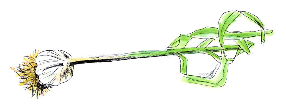 3_garlic.jpg