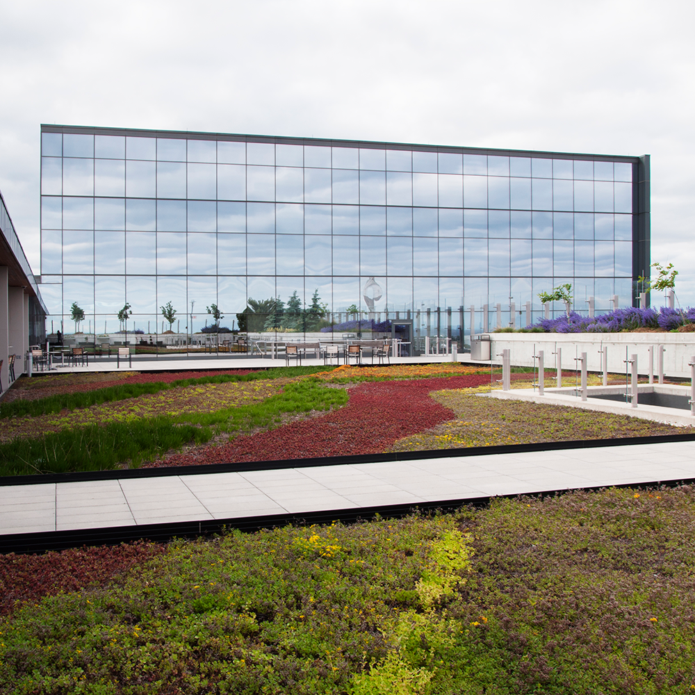 Bridgepoint-green-roof1.png