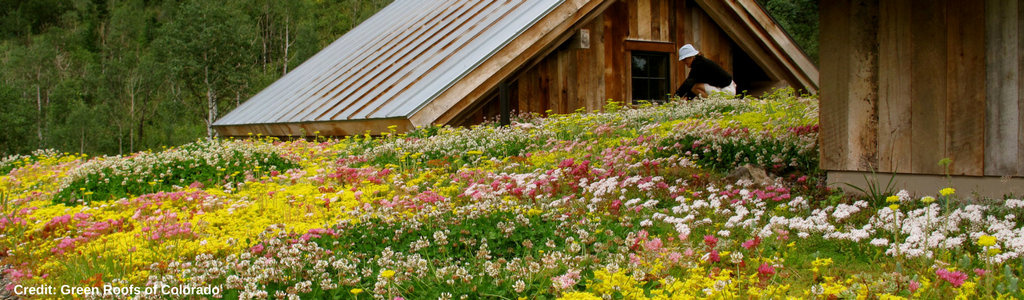 Credit_ Green Roofs of Colorado 2.png