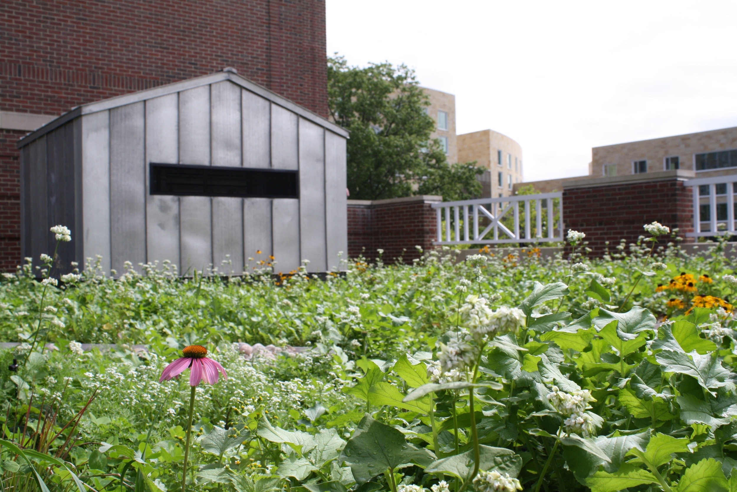 P12_Extensive_Institional_McArthurMcCollumBuildingRooftopMeadow-2_Credit-RecoverGreenRoofs.jpg