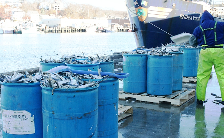 THE LARGEST BAIT VARIETY IN THE ATLANTIC NORTH EAST  - Operating for 17 years and still going strong!Trust Us for Your Fresh, Salted & Frozen Bait Needs From (1) Carton to a Full Truck Load. Herring, Mackerel, Pogies, Redfish, Rockfish, Tuna, Monkfish, Sardines, Plaice, Squid, Sea Robin, Halibut, & Silversides. → CONTACT US