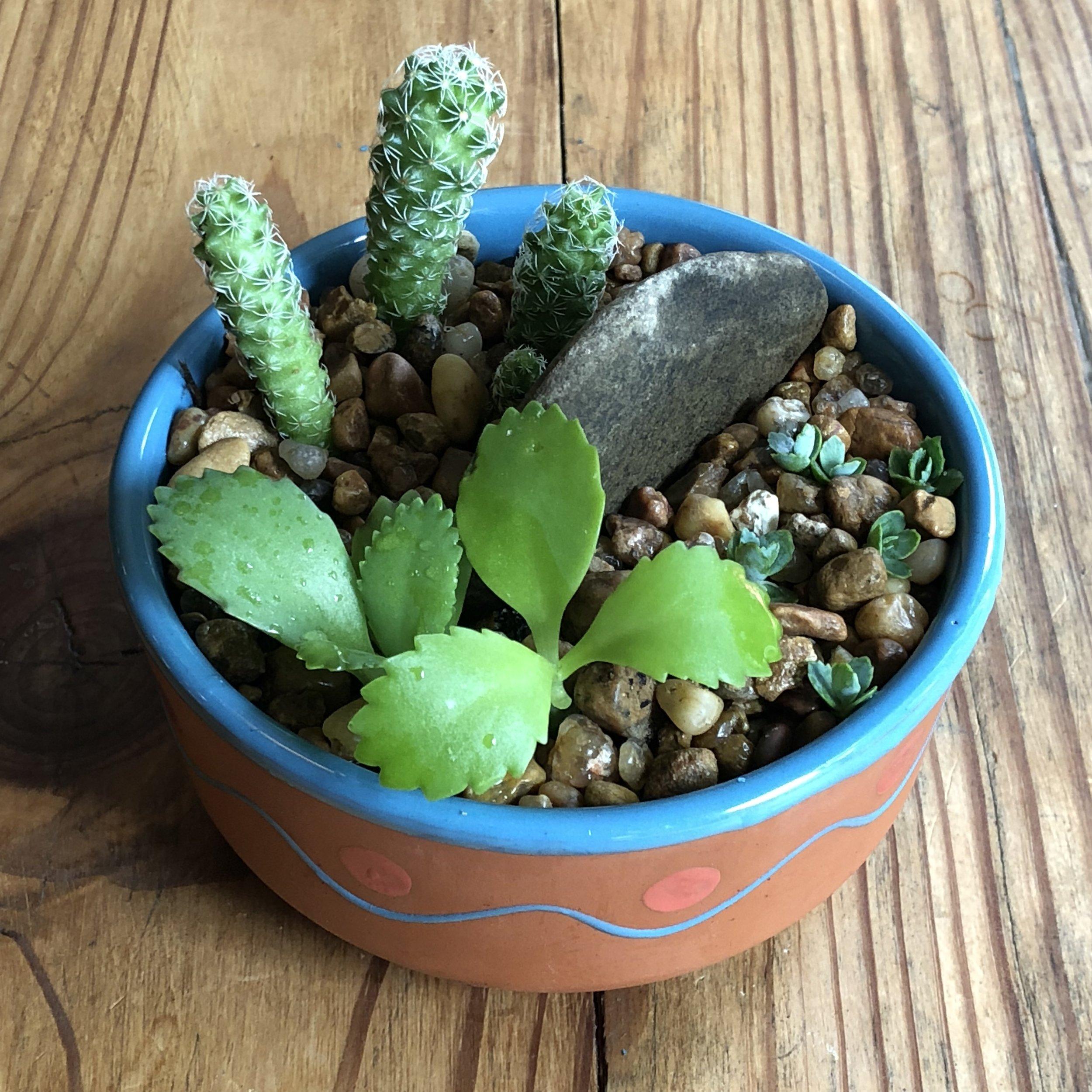 Petite Bowl $5.jpeg
