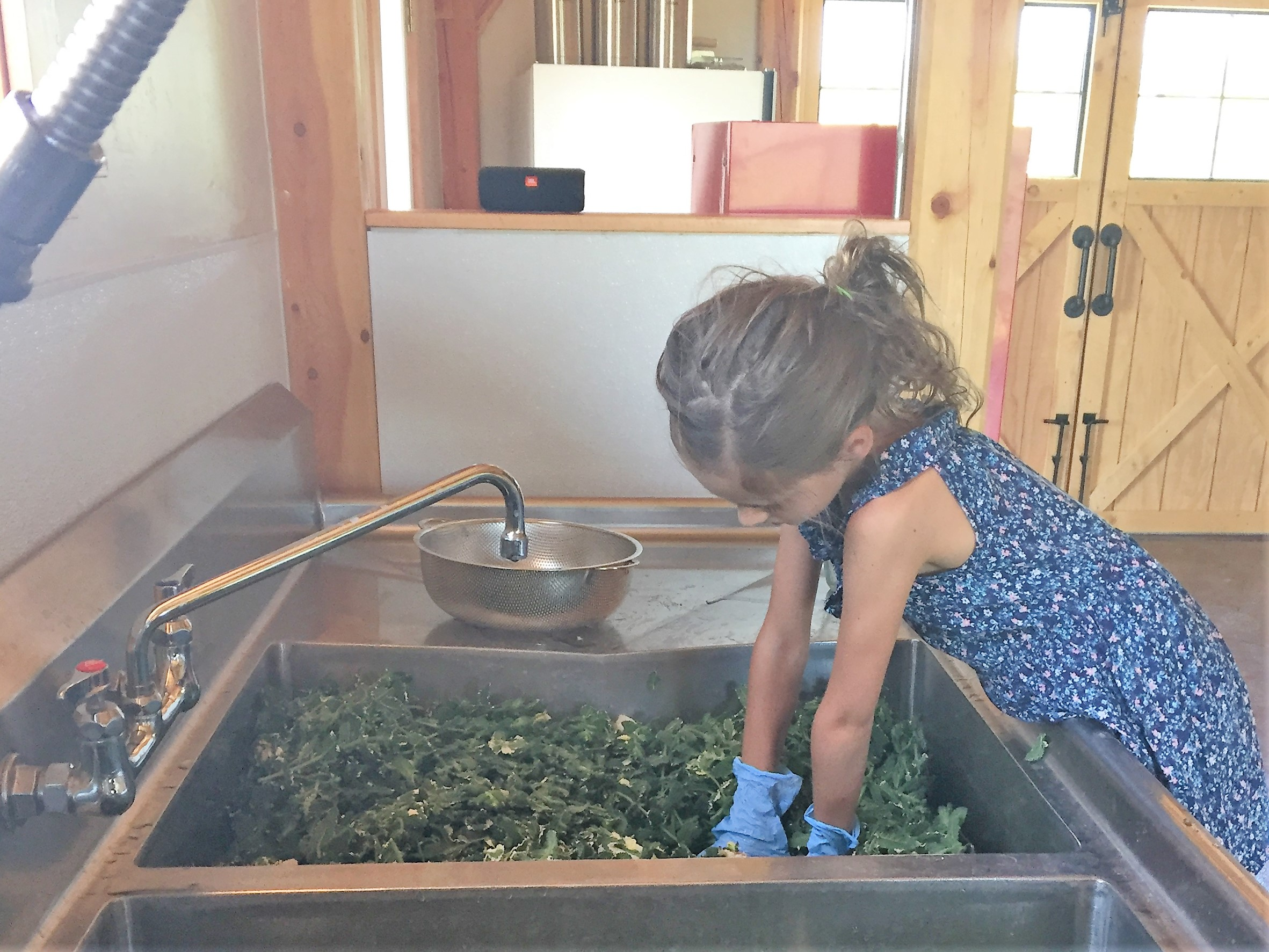 Step 4: Wash It - All of our ingredients come through the barn (our certified commercial kitchen) for cleaning.Our washing process is three steps: clean, sanitize, rinse. Clean and pure from start to end.It's like a little spa. But don't be jealous.